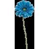 plavi gerber - Plants -