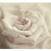 flowers paper rose - Background -