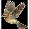 ptica - Animals -