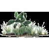 trava - Plants -