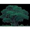 Tree - Narava -