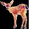 Deer - Ilustrationen -