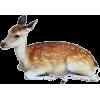 Deer - Tiere -