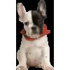 Dog White - 动物 -