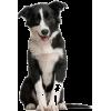 Dog - Animais -