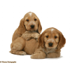 Dogs - Animales -