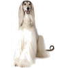 Dogs - Uncategorized -