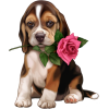 Dog with rose - Animals -