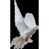 Dove - Животные -