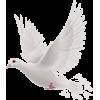 Dove - Animals -