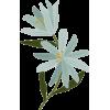 Dvjug - Plants -