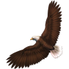 Eagle - Animals -