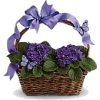 Easter Basket - Plants -