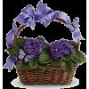 Easter Basket - Rośliny -