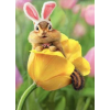 Easter - Objectos -