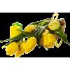 Easter flowers - Plantas -