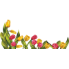 Easter tulips - Illustrations -