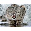 leopard - My photos -