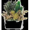 Flower - Plants -