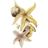 Starfish - Items -