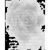 rose text - Texts -