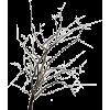 Three - Plants -