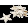 stars - Artikel -