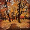 Fall Art - Nature -