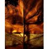 Fall Art - Priroda -