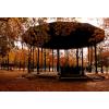 Fall park - Nature -