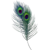 Feather - Предметы -