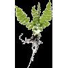 Fern - Plantas -