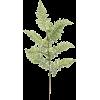Fern - Plants -