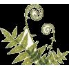 Ferns - 植物 -