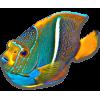 Fish - Animales -