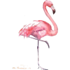 Flamingo - Animals -