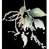 Floplan - Plantas -