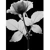 Floral Decor - Illustrations -