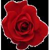 Flores - Frames -