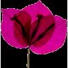 Flores - 植物 -