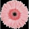 Flores - Biljke -