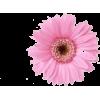 Flores - Plants -