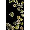 Flores - Растения -