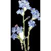 Flower Blue - Rośliny -