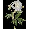 Flower Mum - Nature -