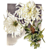 Flower Mum - Nature -