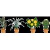 Flower Pots - Uncategorized -