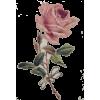 Flower Vintage - Rascunhos -