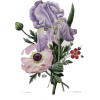 Flower Vintage - Background -