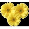 Flower/Yellow - Plantas -